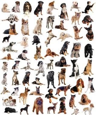 Des chiens plutôt différents les uns des autres